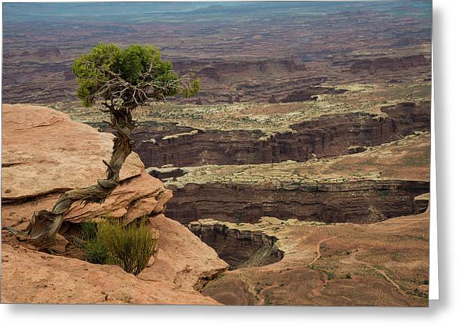 Greeting Card featuring the photograph Canyonlands by Gary Lengyel
