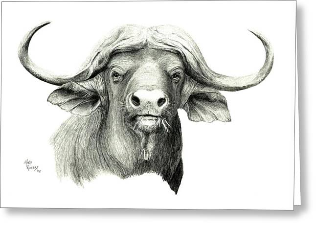 Cape Buffalo Greeting Card by Mary Rogers