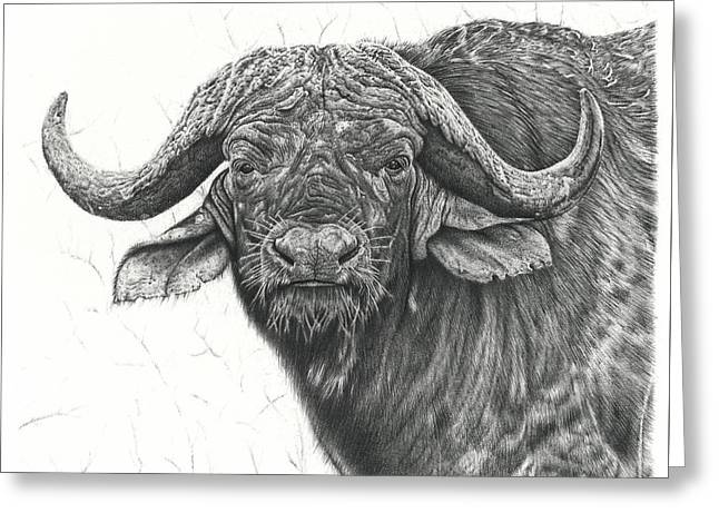 Cape Buffalo Greeting Card