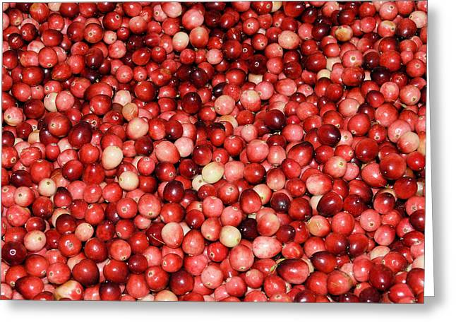 Cape Cod Cranberries Greeting Card