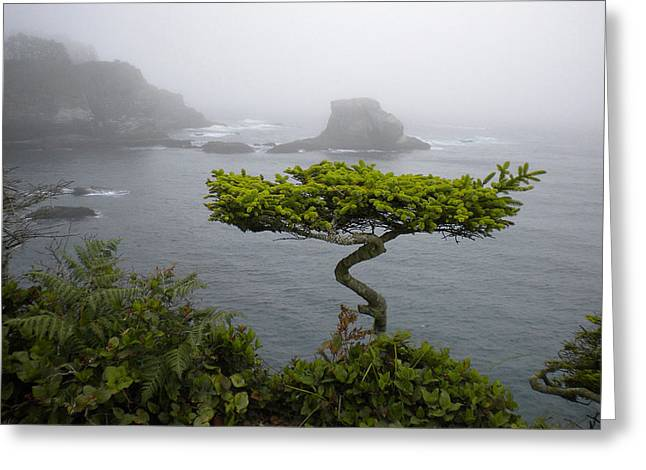 Cape Flattery Noble Greeting Card