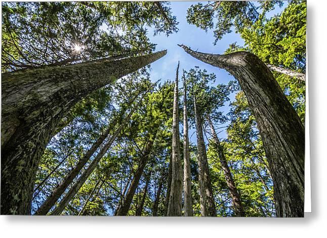 Cape Flattery Trees Greeting Card by Pelo Blanco Photo