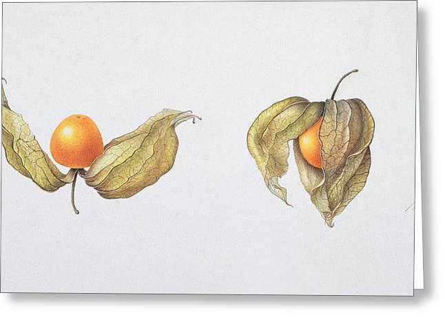 Cape Gooseberries Greeting Card