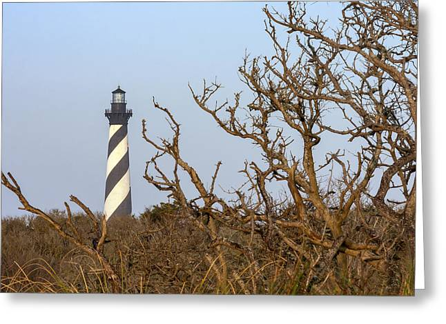 Cape Hatteras Lighthouse Through The Brush Greeting Card