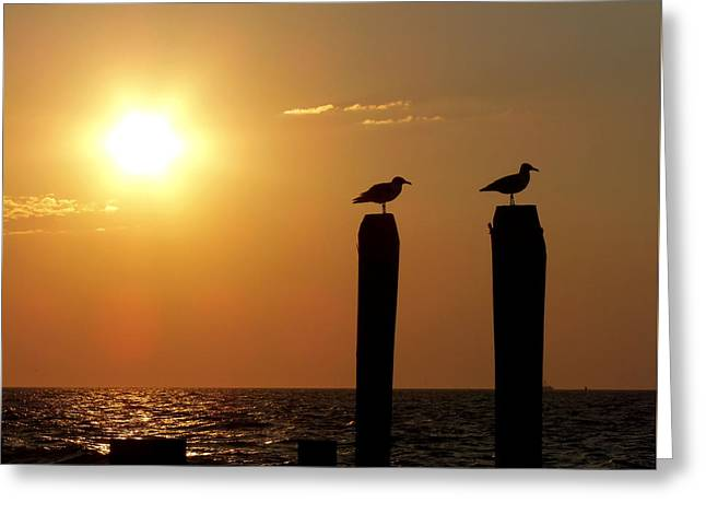 Cape May Morning Greeting Card by JAMART Photography