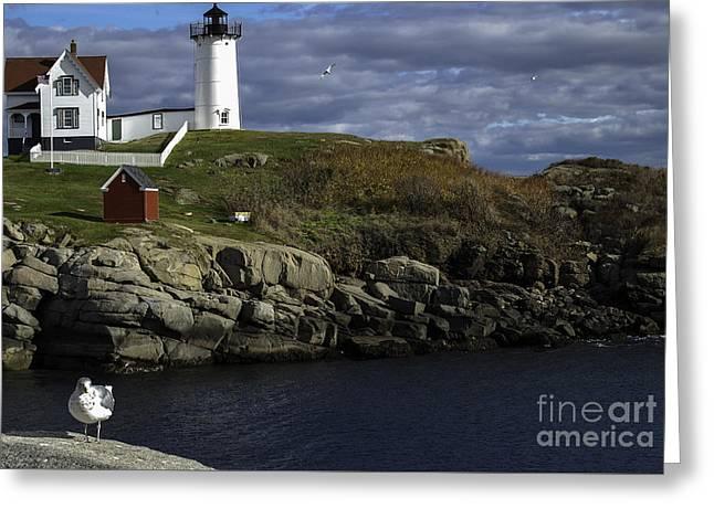 Cape Neddick Lighthouse Greeting Card by Mim White