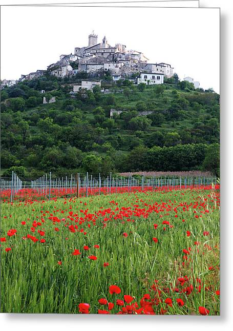 Capestrano And Poppy Fields Greeting Card by Tom  Doherty
