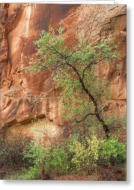 Capitol Gorge Greeting Card by Joseph Smith