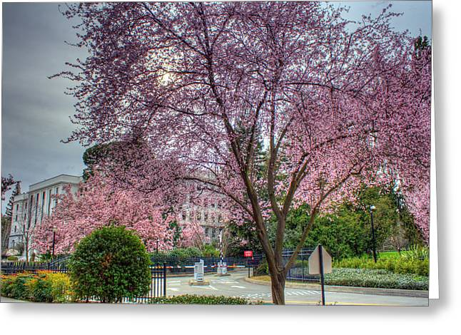 Capitol Tree Greeting Card by Randy Wehner Photography
