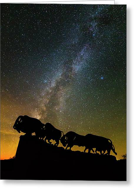 Caprock Canyon Bison Stars Greeting Card by Stephen Stookey