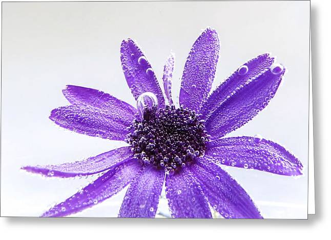 Captivating Greeting Card by LeAnne Perry