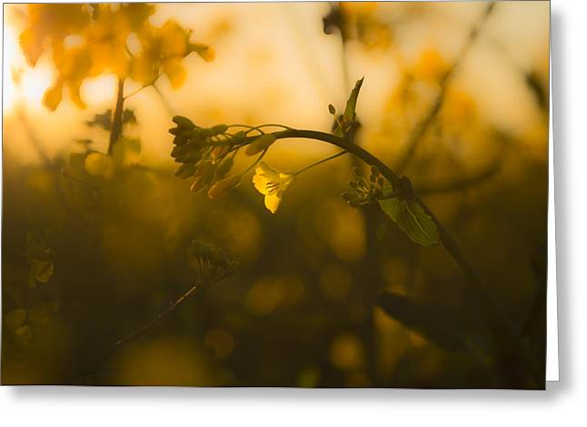 Capturing The Evening Sunlight Greeting Card by Chris Fletcher