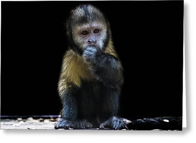 Capuchin Monkey Greeting Card by Martin Newman