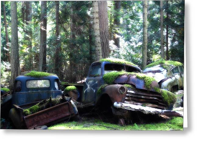 Car Lot In The Forest Greeting Card by Diane Smith