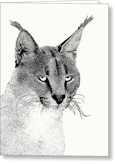 Caracal Wild Cat Portrait Greeting Card
