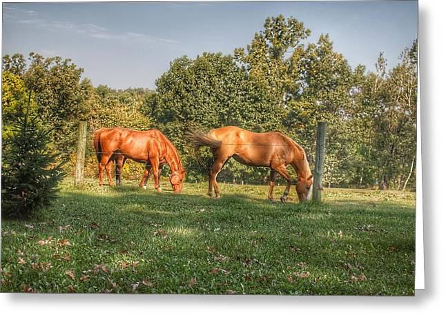 1006 - Caramel Horses I Greeting Card