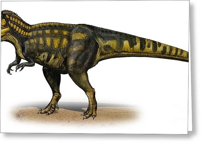 Carcharodontosaurus Iguidensis Greeting Card