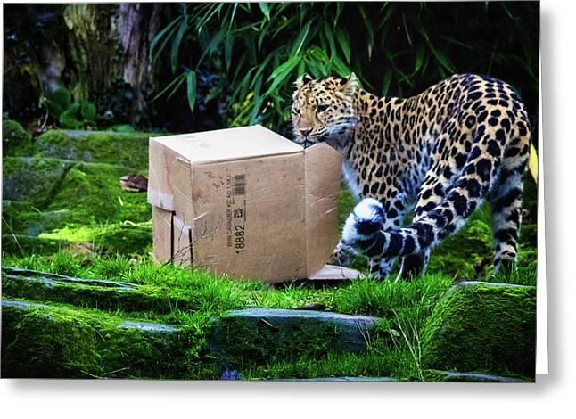 Cardboard Box Fun Greeting Card