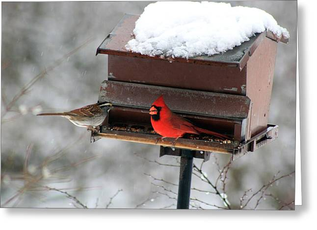 Cardinal And Sparrow At Feeder Greeting Card
