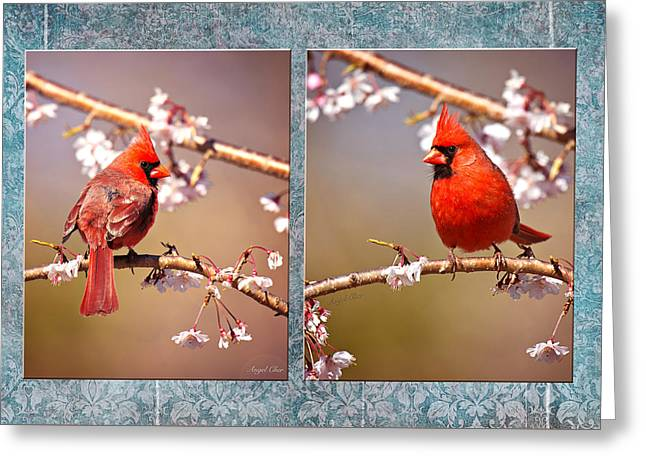 Greeting Card featuring the photograph Cardinal Collage by Angel Cher