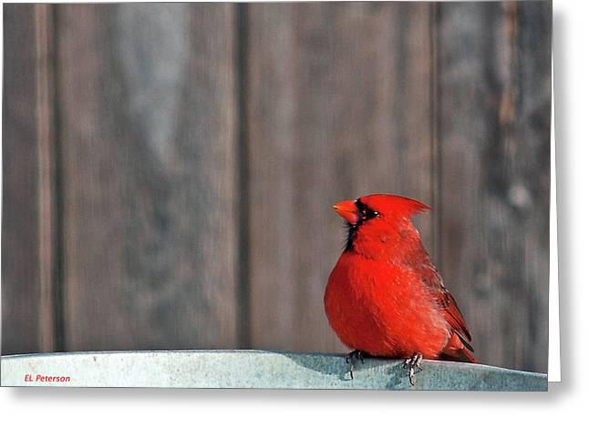 Cardinal Drinking Greeting Card