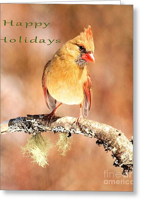 Greeting Card featuring the photograph Cardinal Happy Holidays by Debbie Stahre