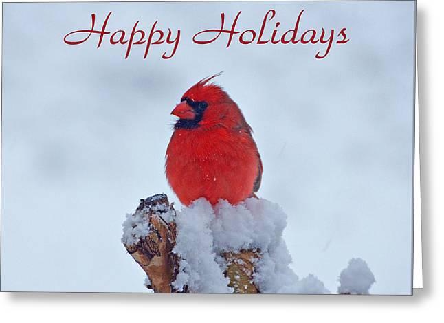 Cardinal Holiday Card Greeting Card by Sandy Keeton