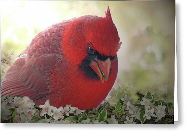 Greeting Card featuring the photograph Cardinal In Flowers by Debbie Portwood