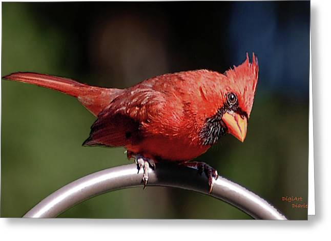 Cardinal In Oils Greeting Card by DigiArt Diaries by Vicky B Fuller