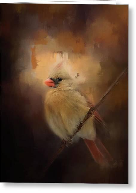 Cardinal In The Evening Light Bird Art Greeting Card