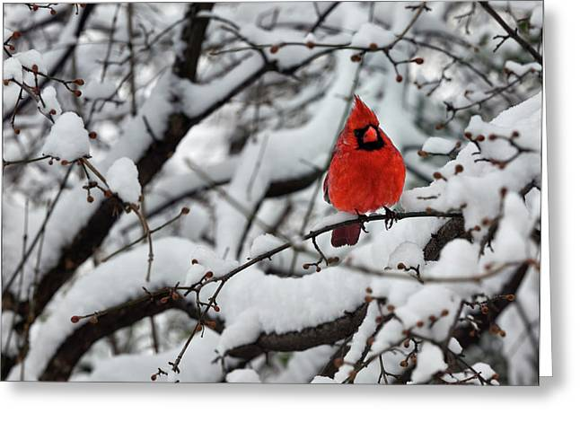 Cardinal In The Snow 2 Greeting Card