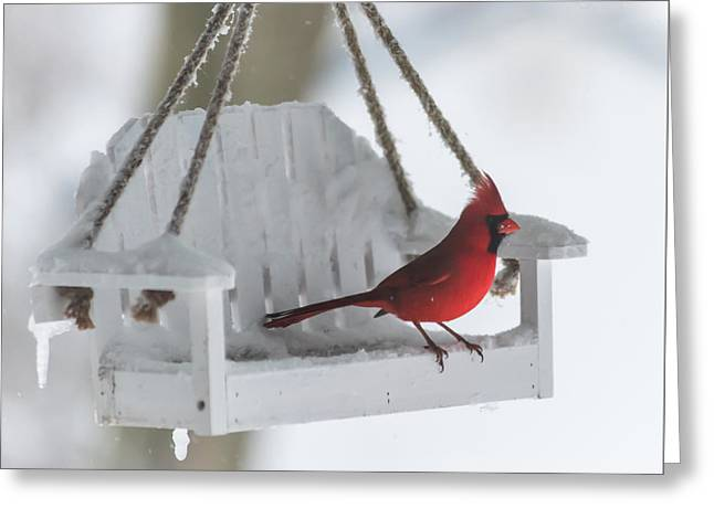 Cardinal On Swing In Snow Storm Greeting Card by Terry DeLuco