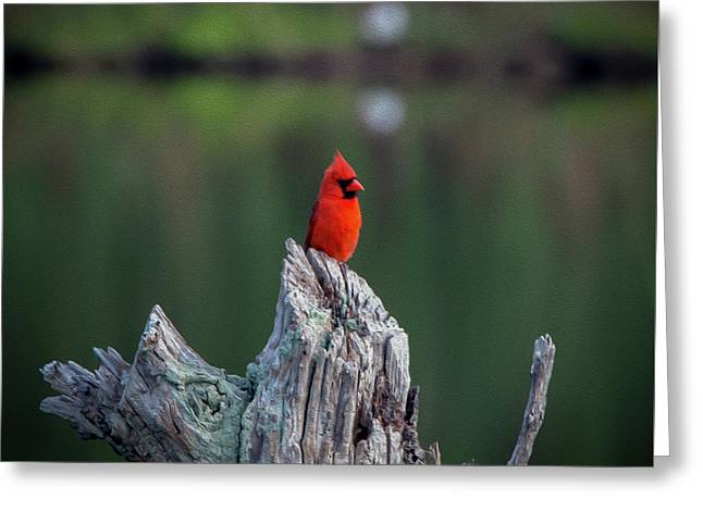 Cardinal - Paint Fx Greeting Card