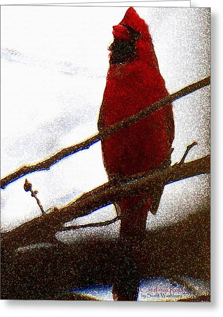 Cardinal Red 2 Greeting Card by Scott  Washburn