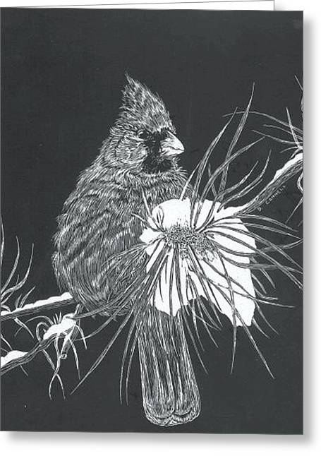 Cardinal Scratch Board Greeting Card by Darren Cannell