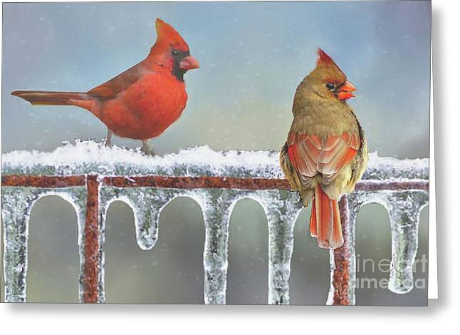 Cardinals And Icicles Greeting Card