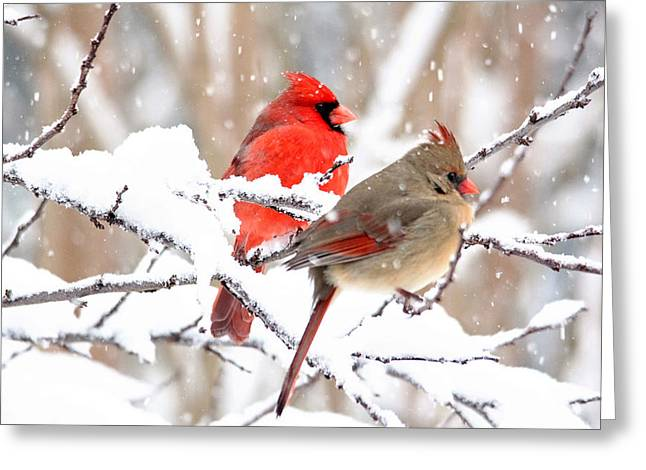 Cardinals In The Winter Greeting Card by Trina Ansel