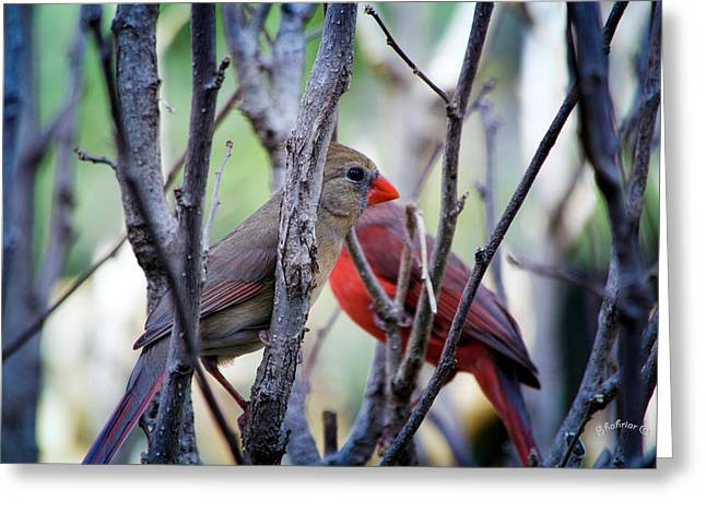 Cardinals Pair Greeting Card