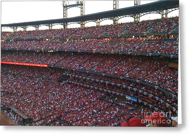 Cardinals Red Greeting Card