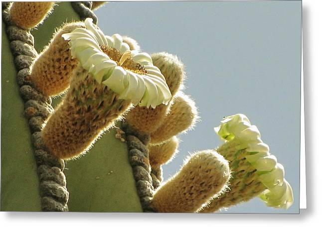 Greeting Card featuring the photograph Cardon Cactus Flowers by Marilyn Smith