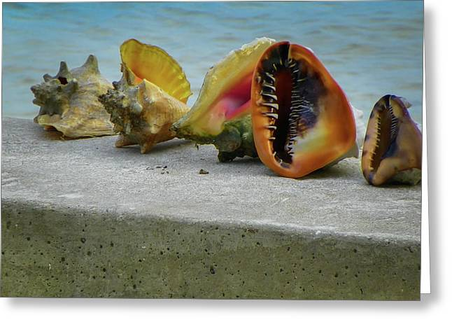 Greeting Card featuring the photograph Caribbean Charisma by Karen Wiles