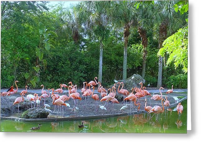 Caribbean Flamingos Greeting Card by Tammy Chesney