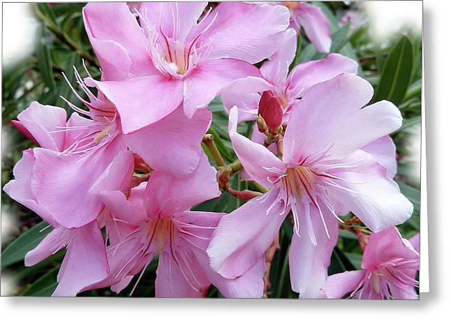 Greeting Card featuring the photograph Caribbean Oleander by Marie Hicks
