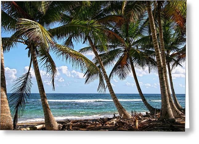 Caribbean Palms Greeting Card