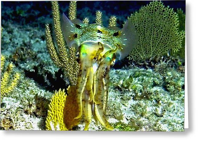Caribbean Squid At Night - Alien Of The Deep Greeting Card by Amy McDaniel