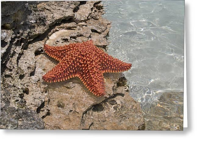 Caribbean Starfish Greeting Card by Betsy Knapp