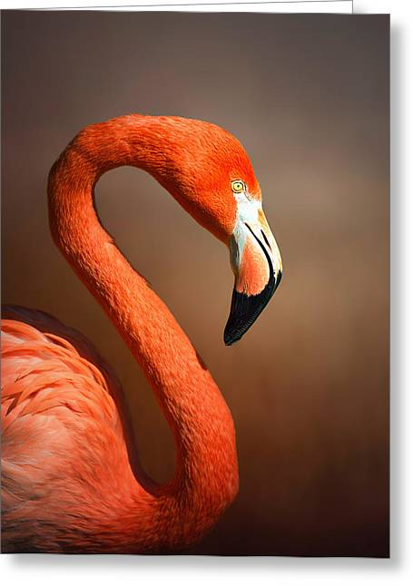 Caribean Flamingo Portrait Greeting Card by Johan Swanepoel