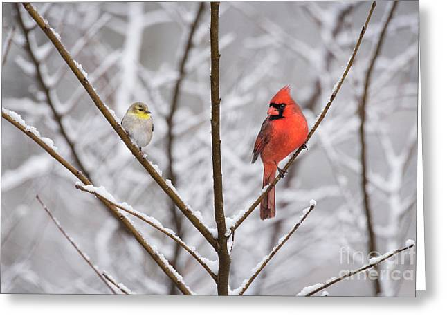 Goldfinch And Cardinal Greeting Card