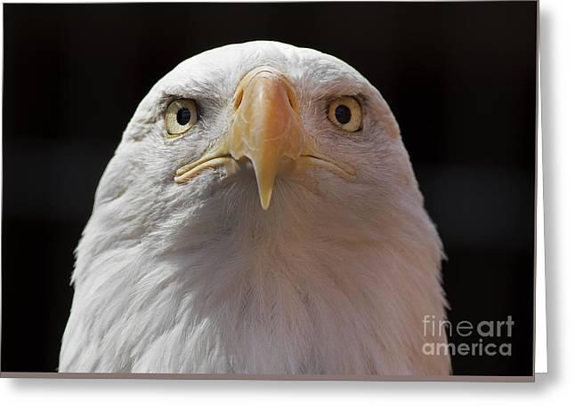 Carlisle Eagle Greeting Card