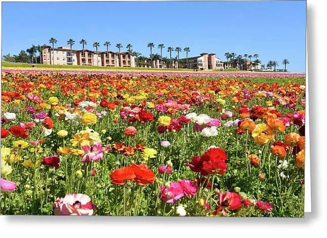Greeting Card featuring the photograph Carlsbad Flower Field by Dung Ma